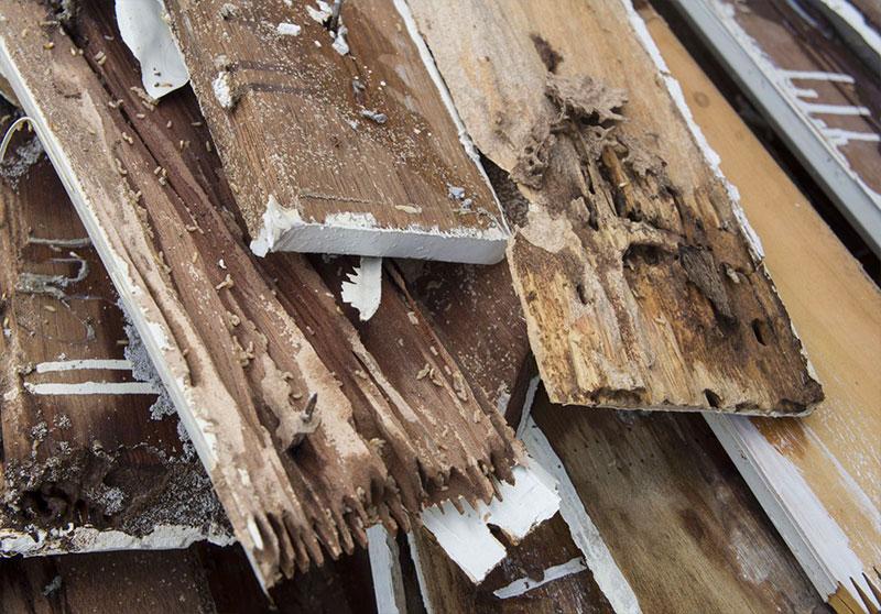 diagnostic termites montpellier